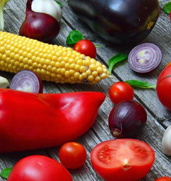Diet Dietitian Algester